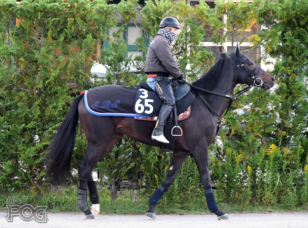 ゴールドフラッグの馬体写真