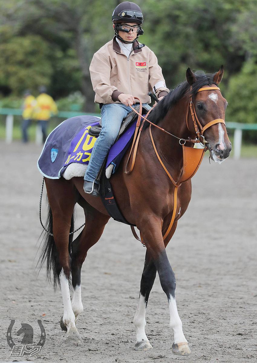 ルーカスの馬体写真