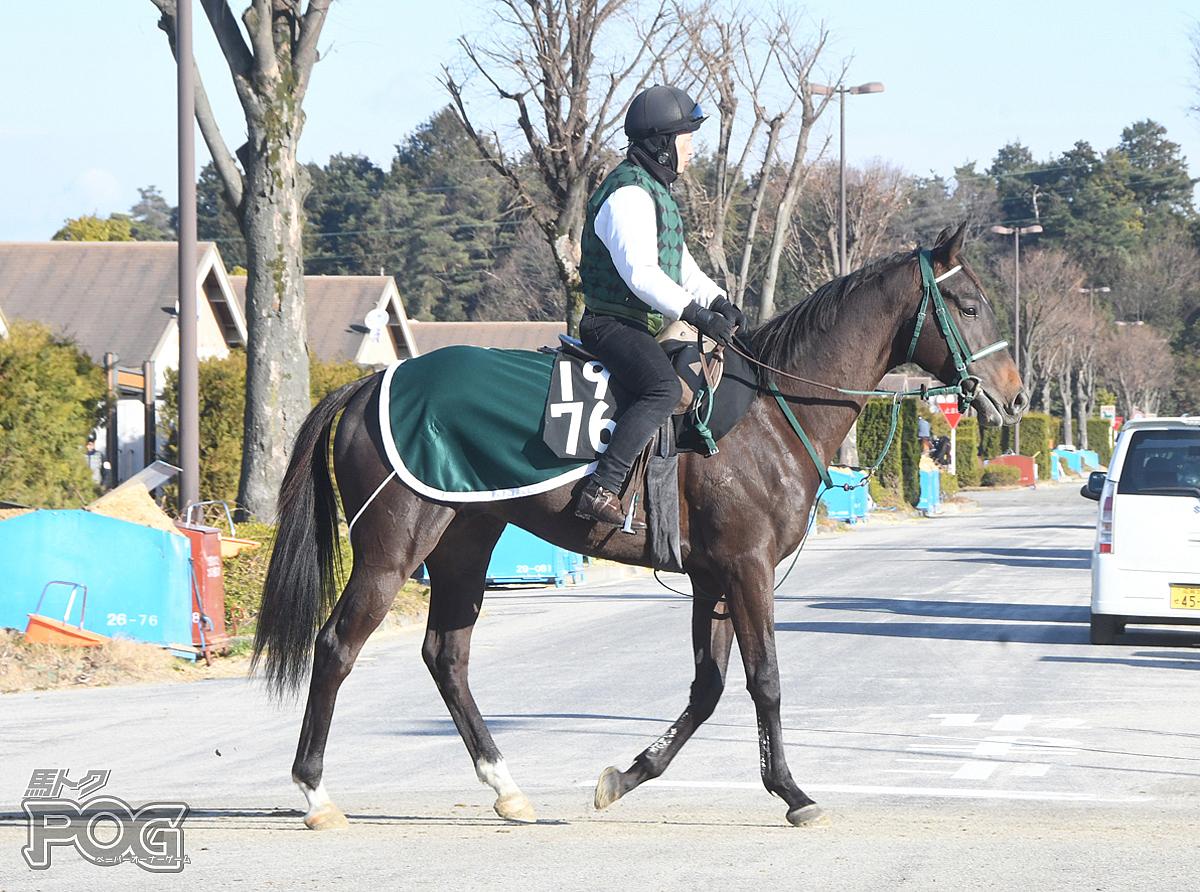 ステップアップの馬体写真