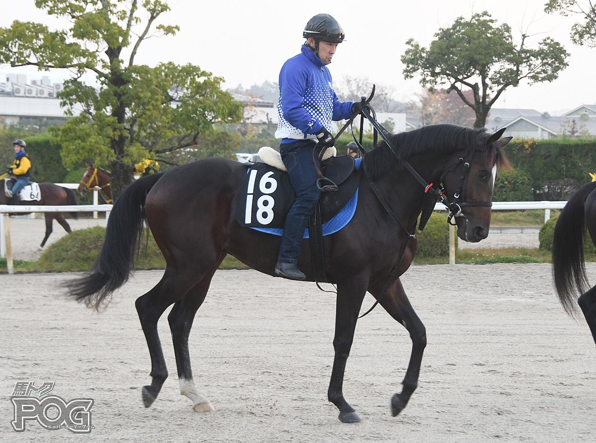 ラガースパーブの馬体写真
