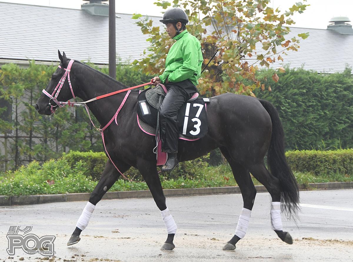 セレンディバイトの馬体写真
