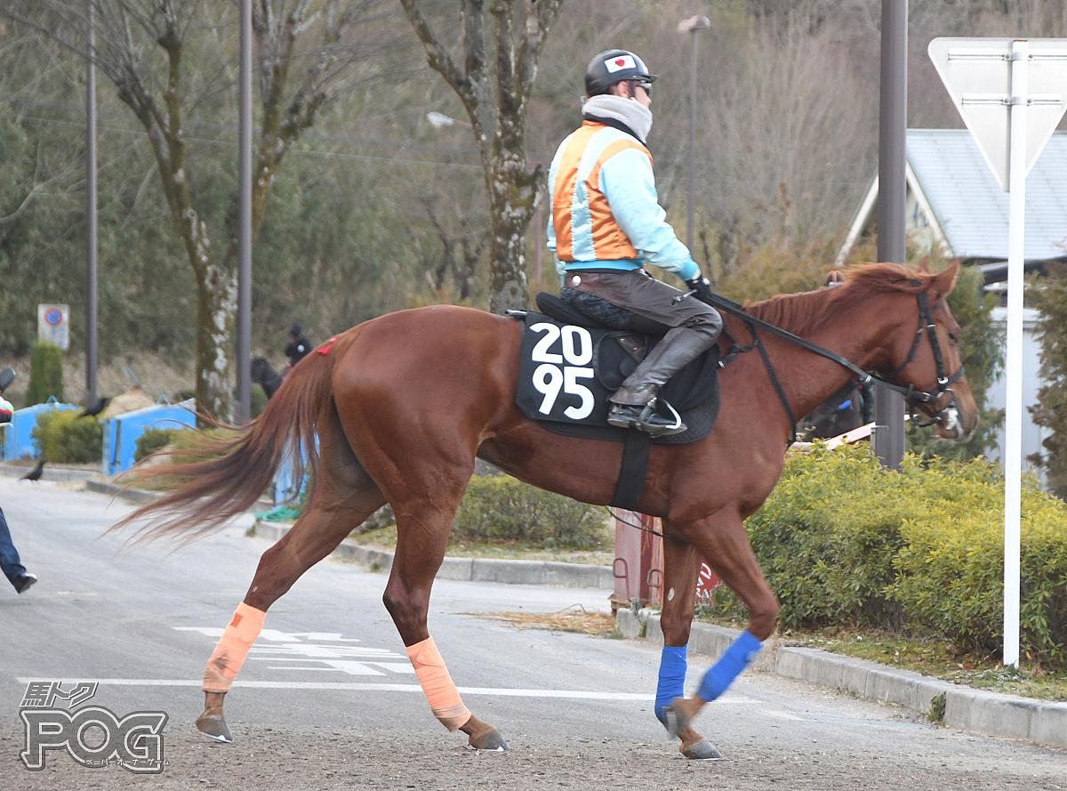 アフロディテバイオの馬体写真