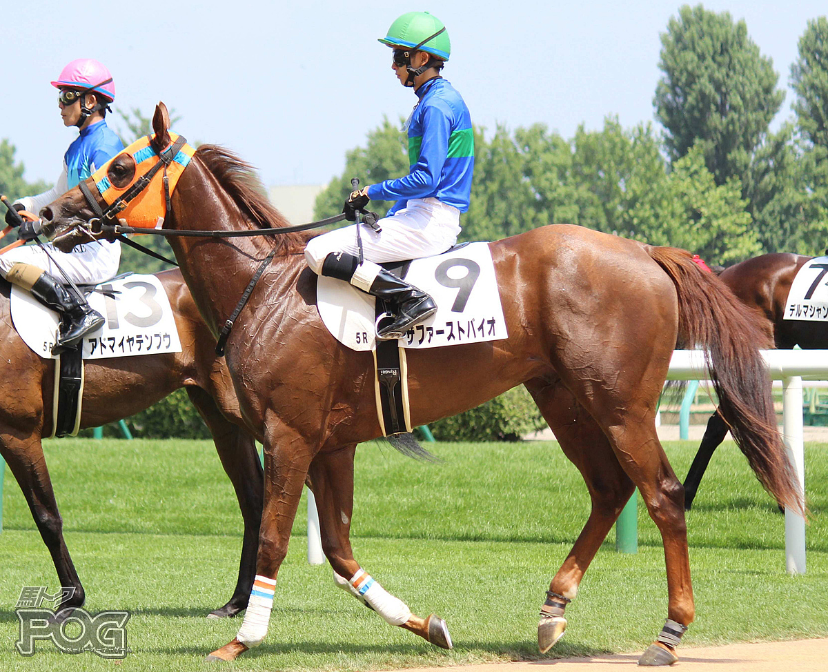ザファーストバイオの馬体写真