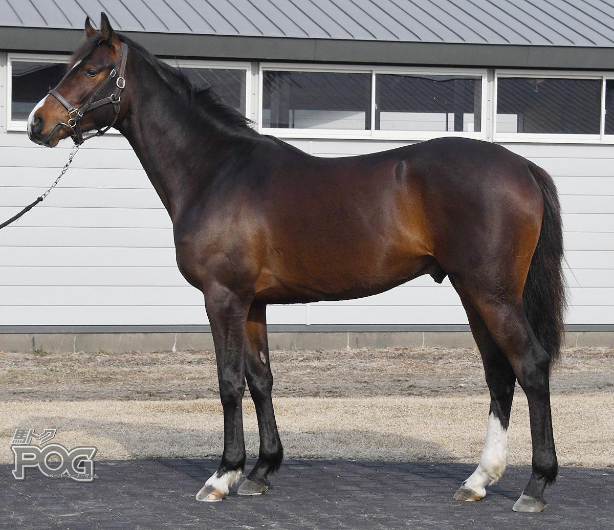 セイウンシヴァの馬体写真