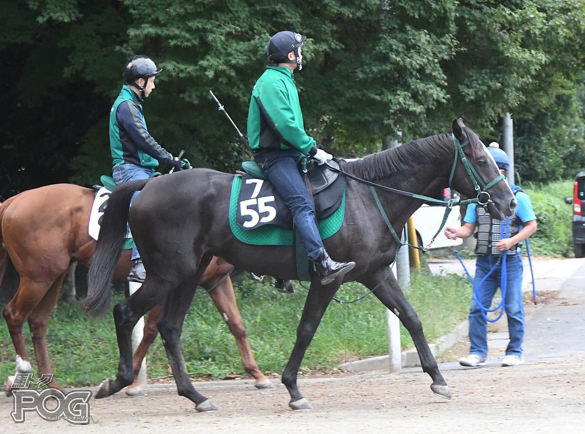 ニシノプログレスの馬体写真