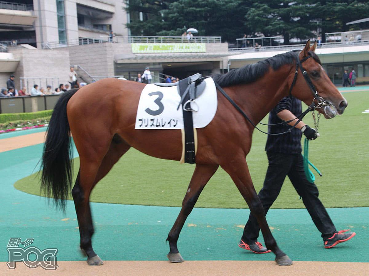プリズムレインの馬体写真