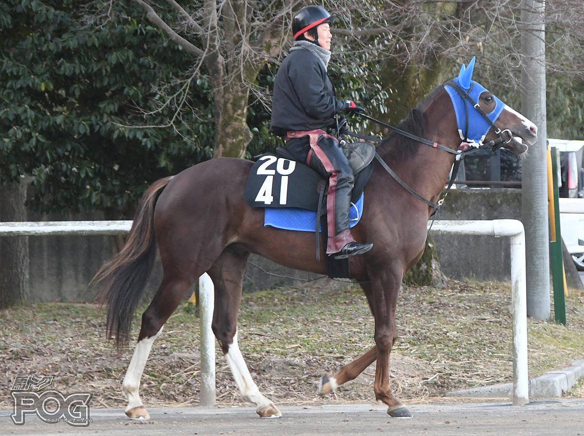メイショウオオクラの馬体写真