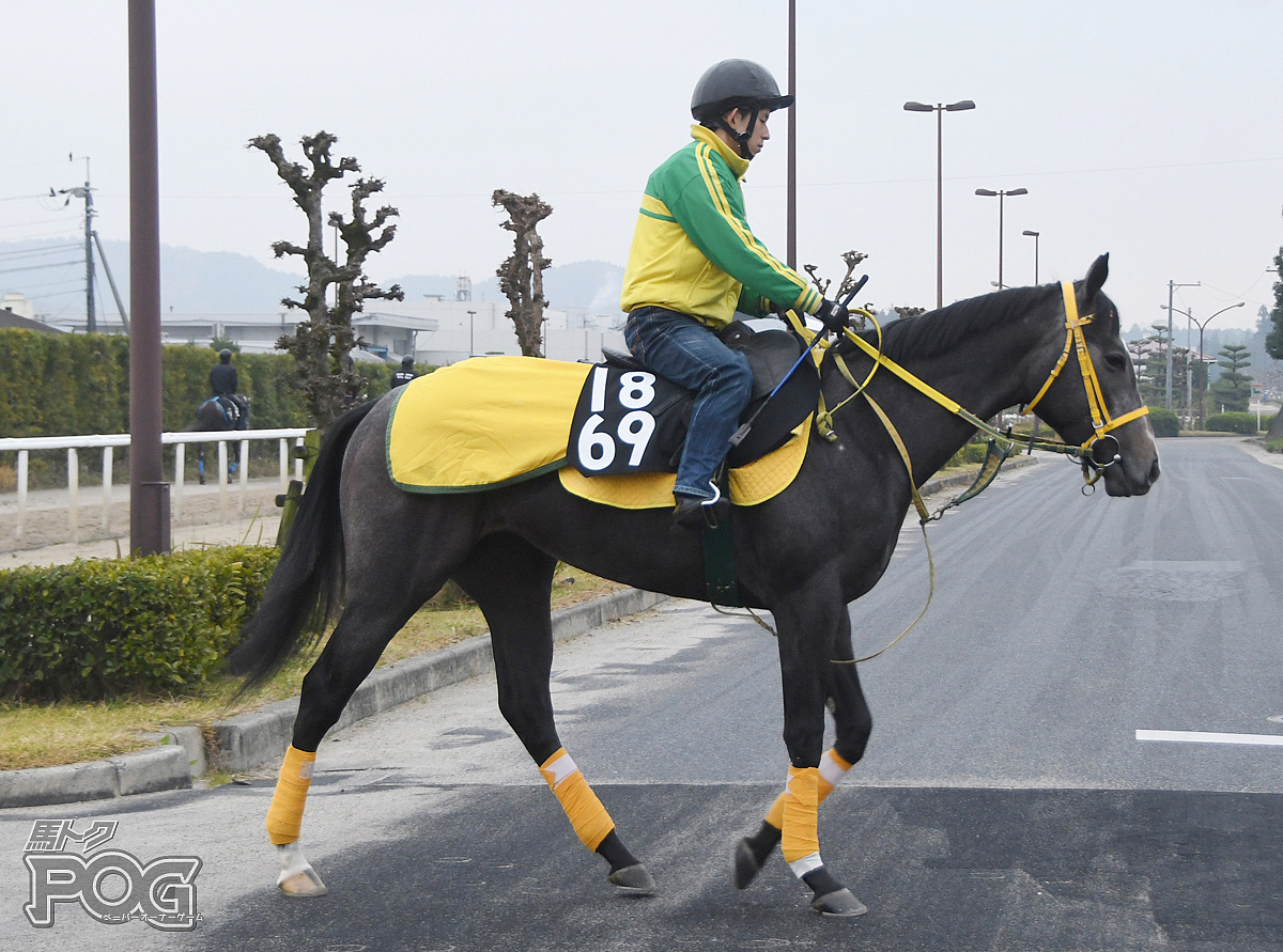 キクノロージズの馬体写真