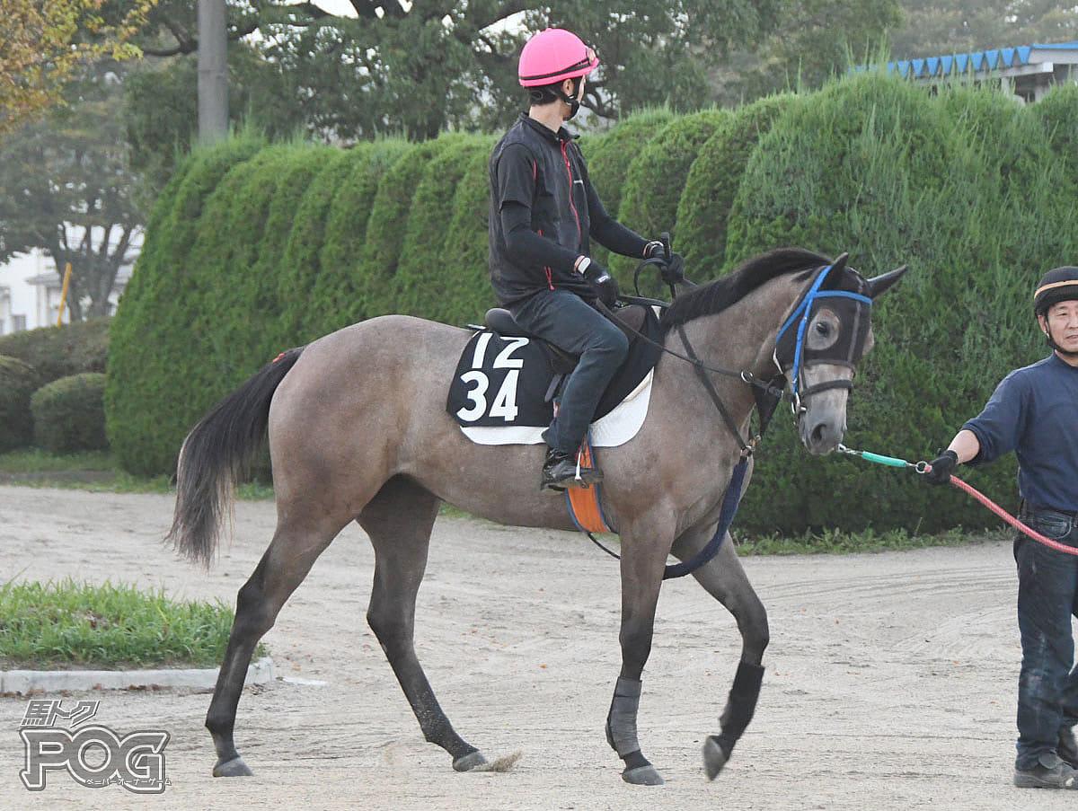 ヴィヴィアナガールの馬体写真