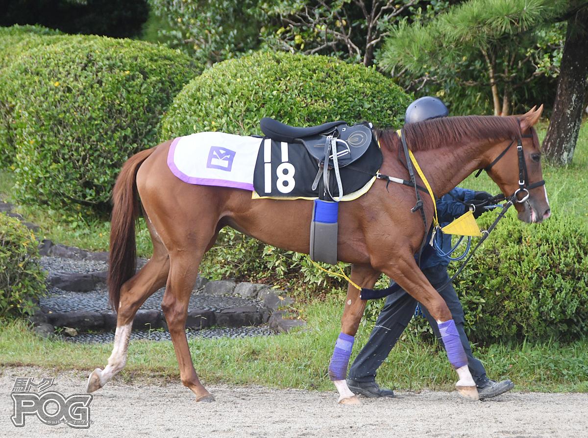ラブリーイレブンの馬体写真