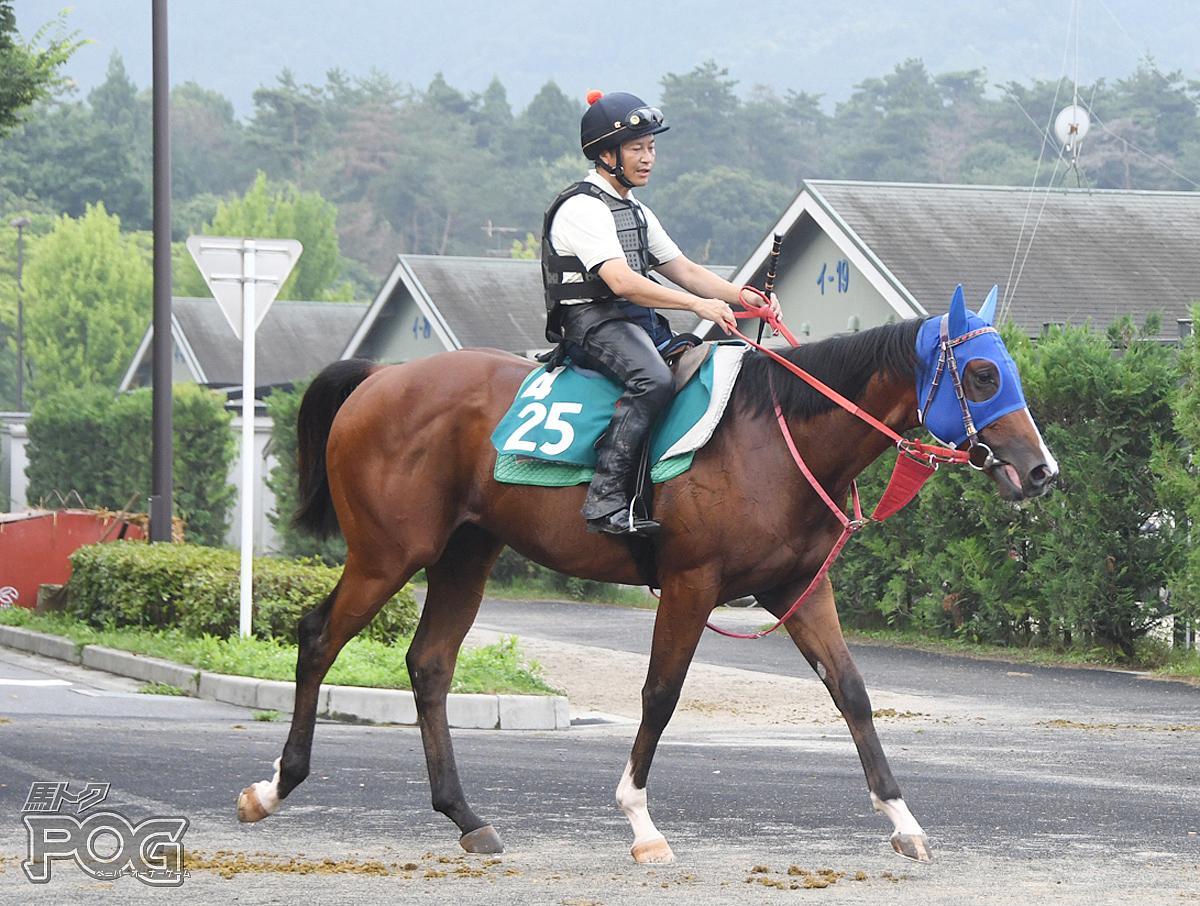 コウエイアンカの馬体写真