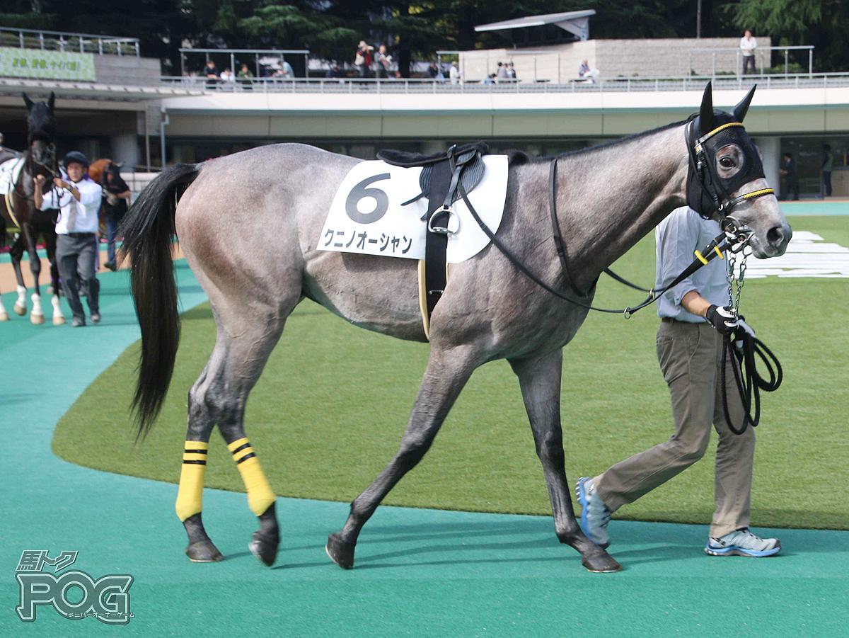 クニノオーシャンの馬体写真