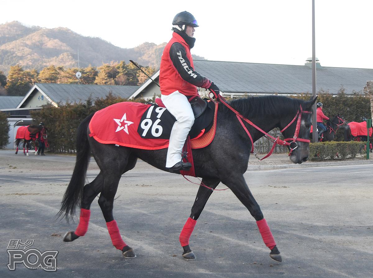 ビーアマルフィの馬体写真