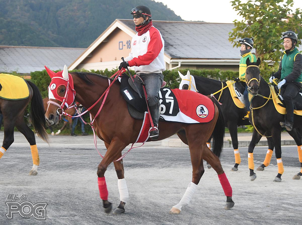 グリエルマの馬体写真