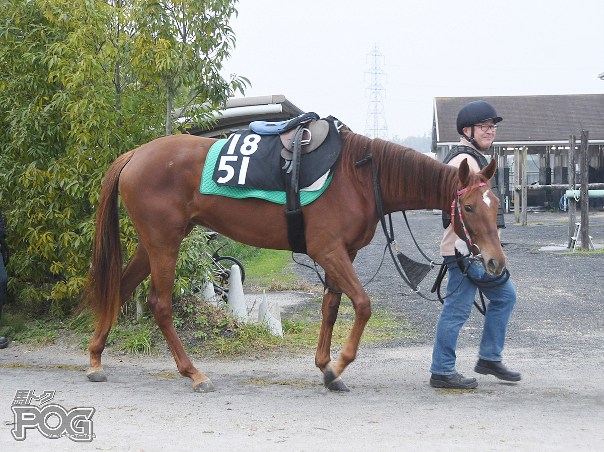 テイエムトレンディの馬体写真