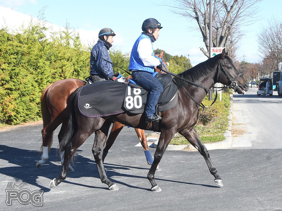 ナリタハーデスの馬体写真