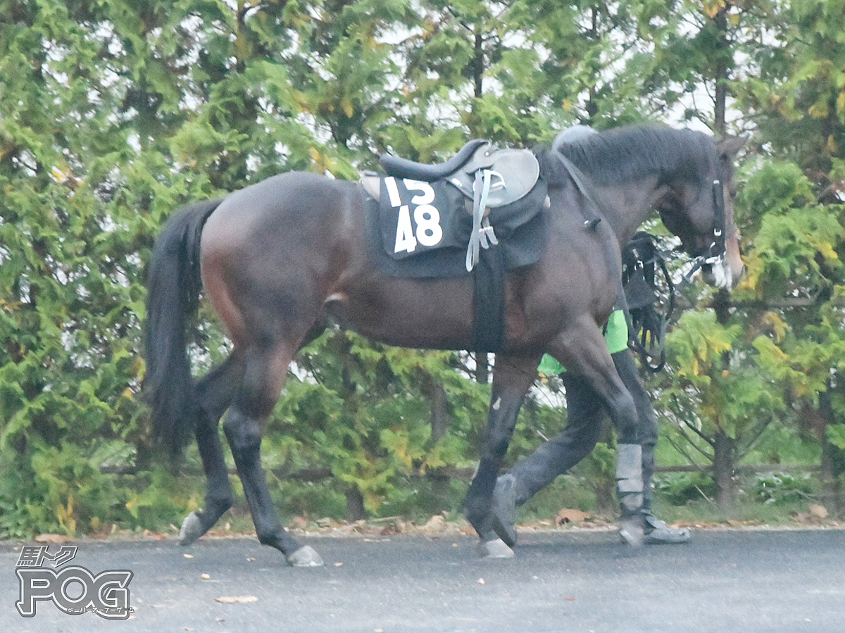 カフジブルーの馬体写真