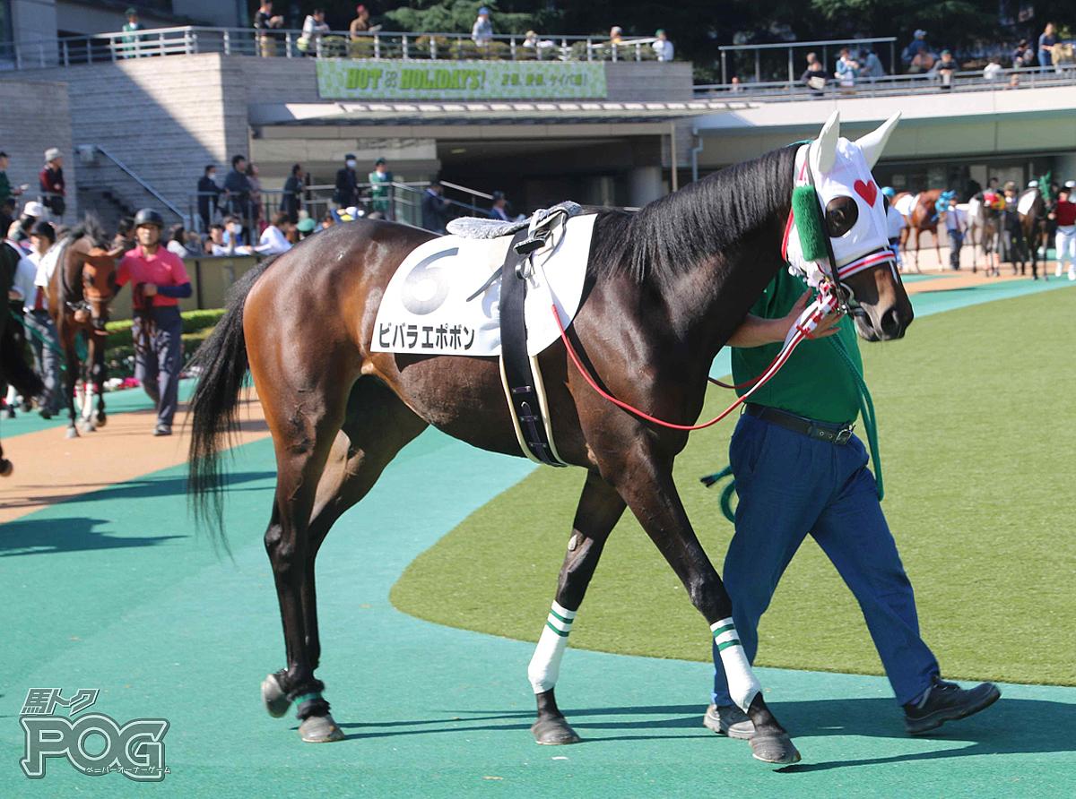 ビバラエポボンの馬体写真