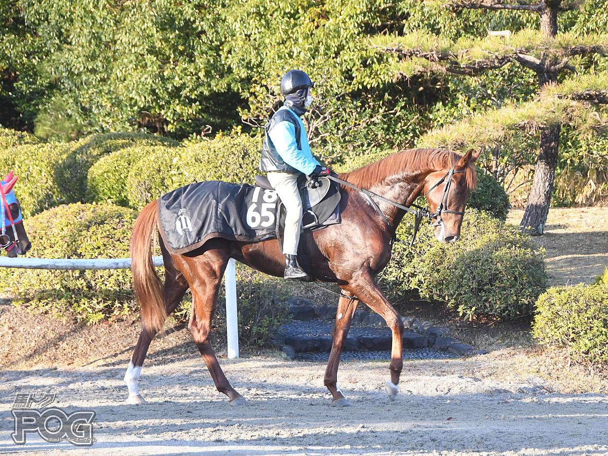 タカノコウインの馬体写真