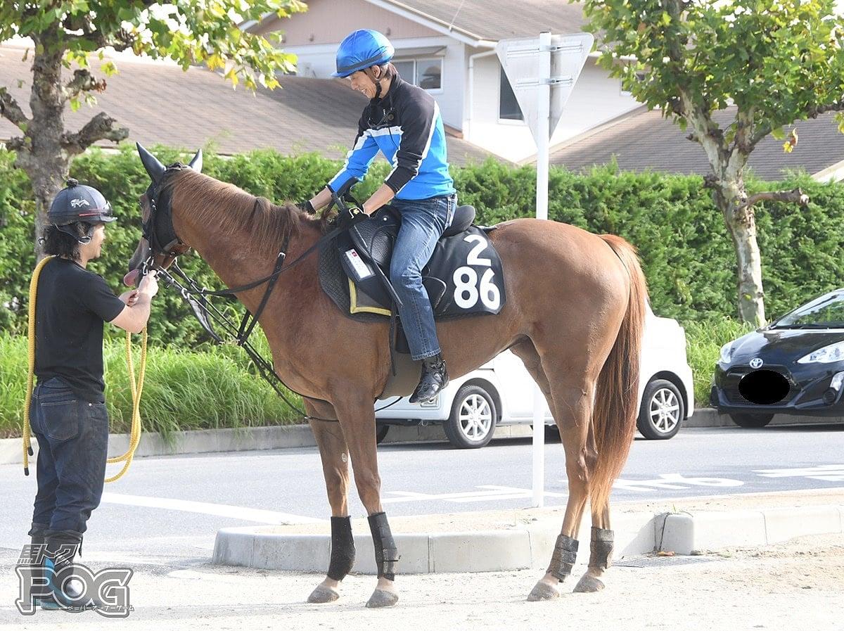 クリノカサットの馬体写真