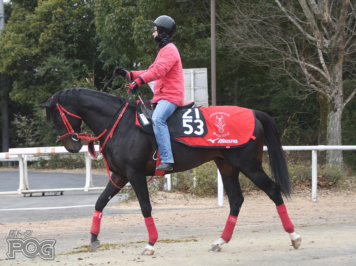 ネオバスティーユの馬体写真