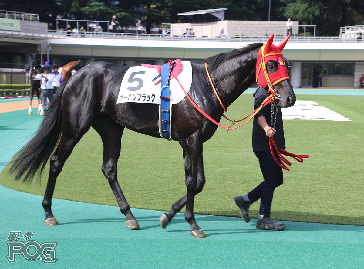 アーバンブラックの馬体写真