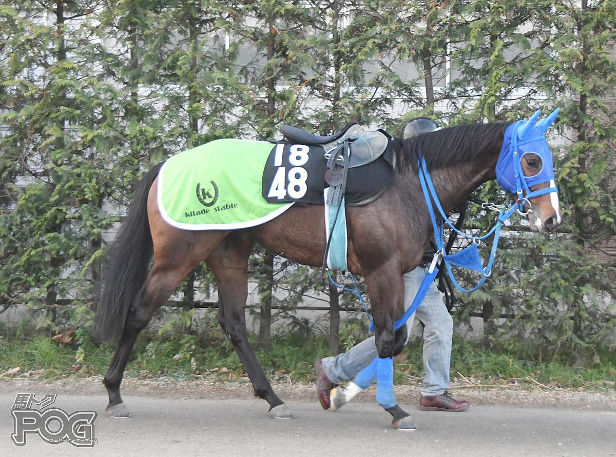 シセイケナゲの馬体写真