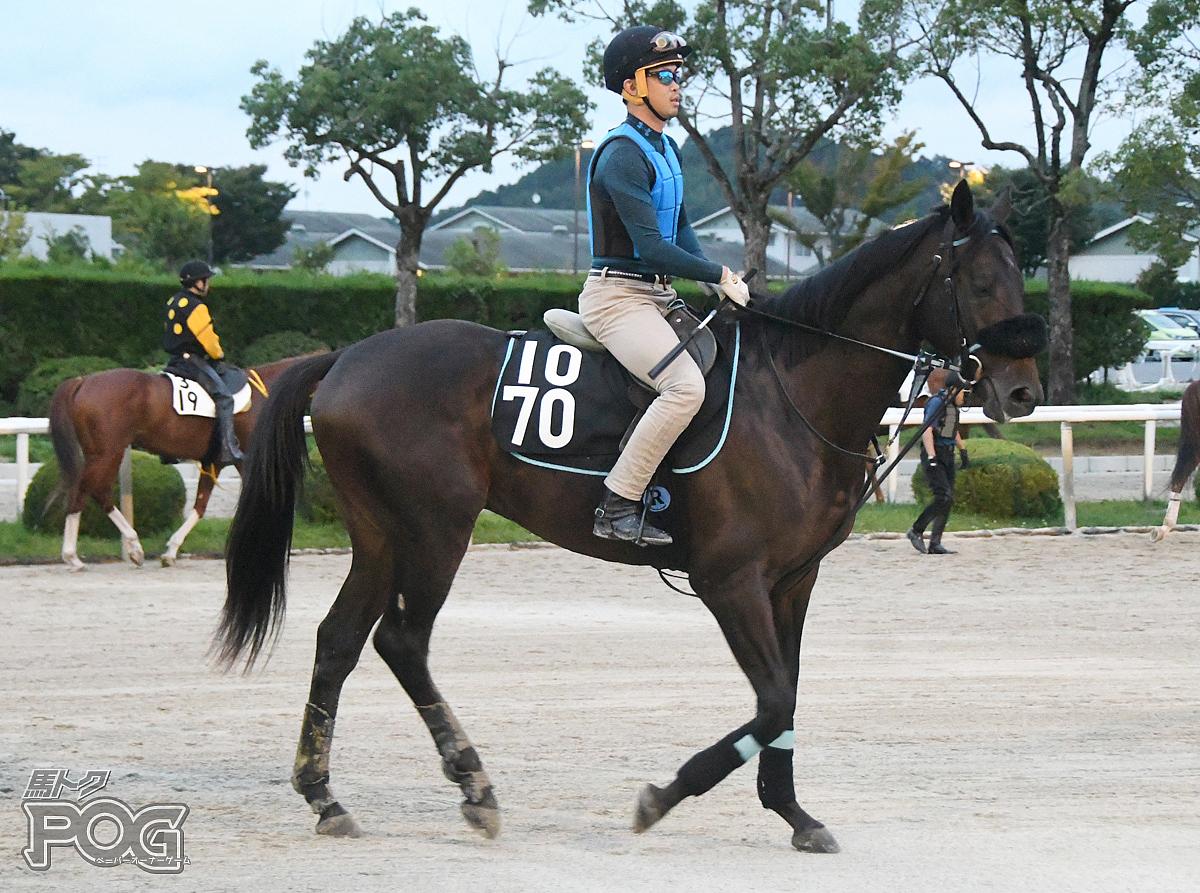モズリュウオウの馬体写真