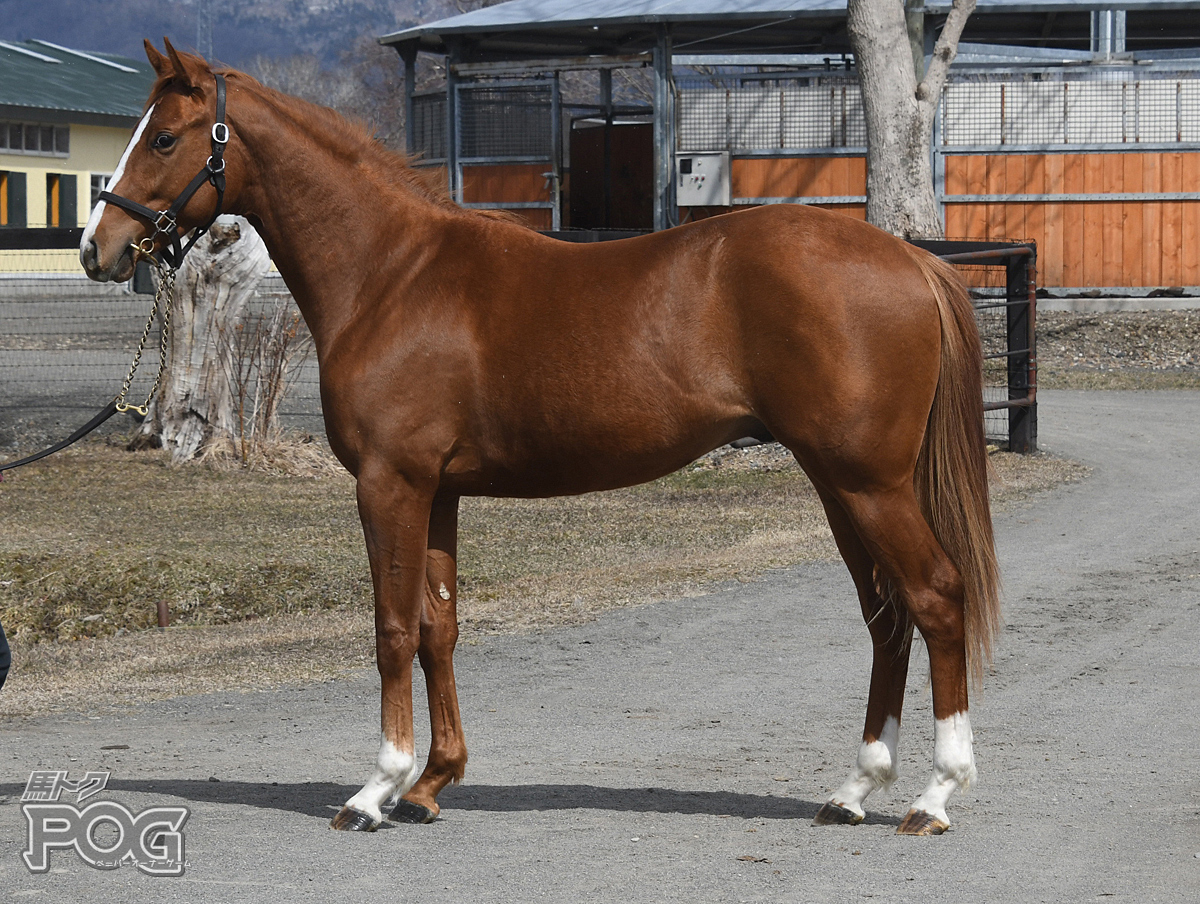 リヤンドールの馬体写真