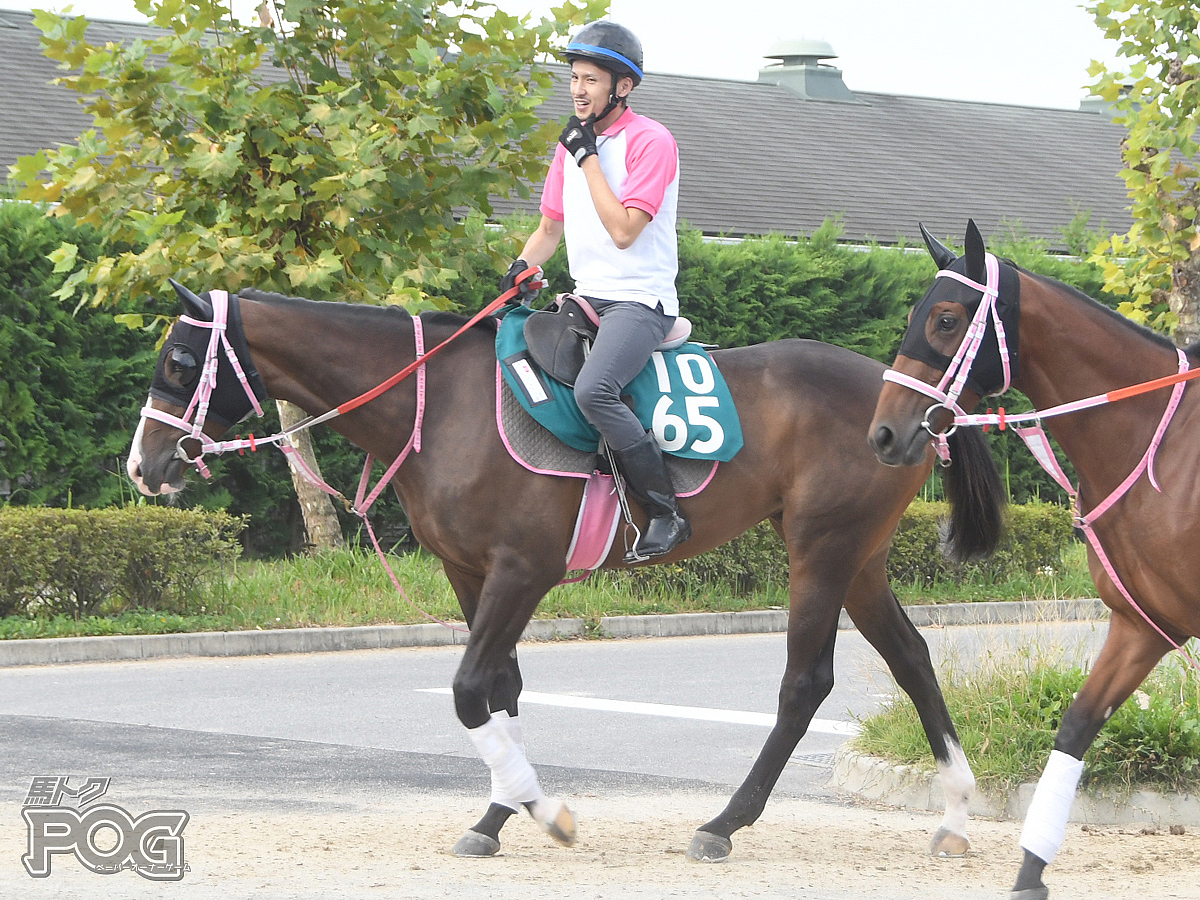 ビップベリンダの馬体写真
