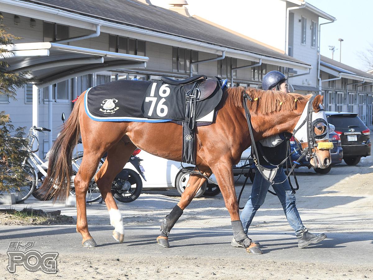 ビップロベルトの馬体写真