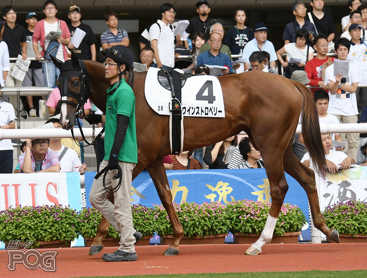 ウインストロベリーの馬体写真
