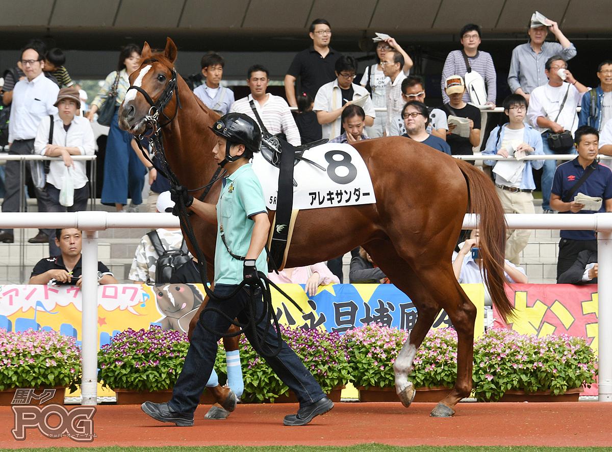 アレキサンダーの馬体写真