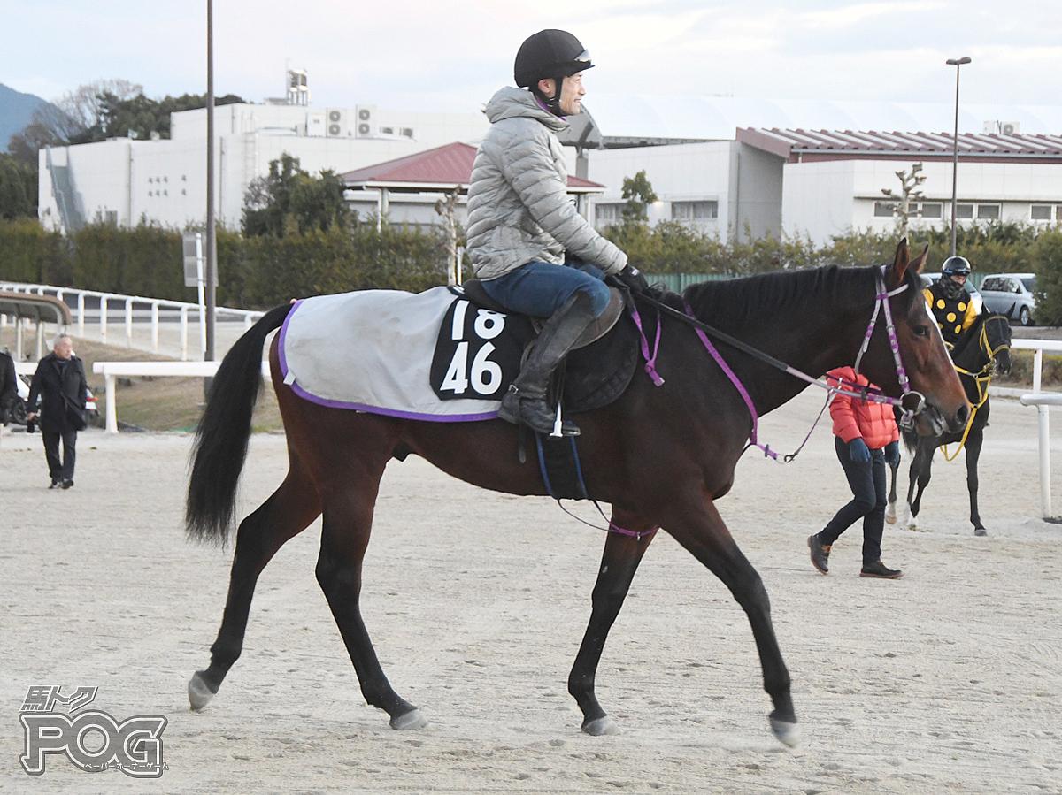 エムオーマンボの馬体写真