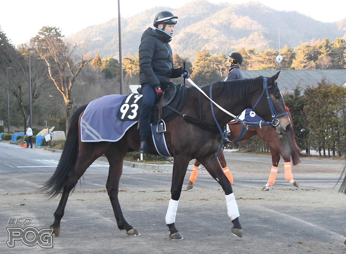 オーパスサブリナの馬体写真