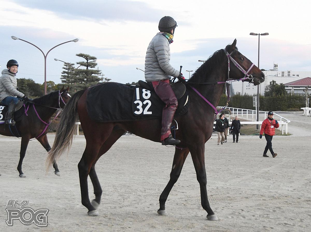 マイヨヴェールの馬体写真