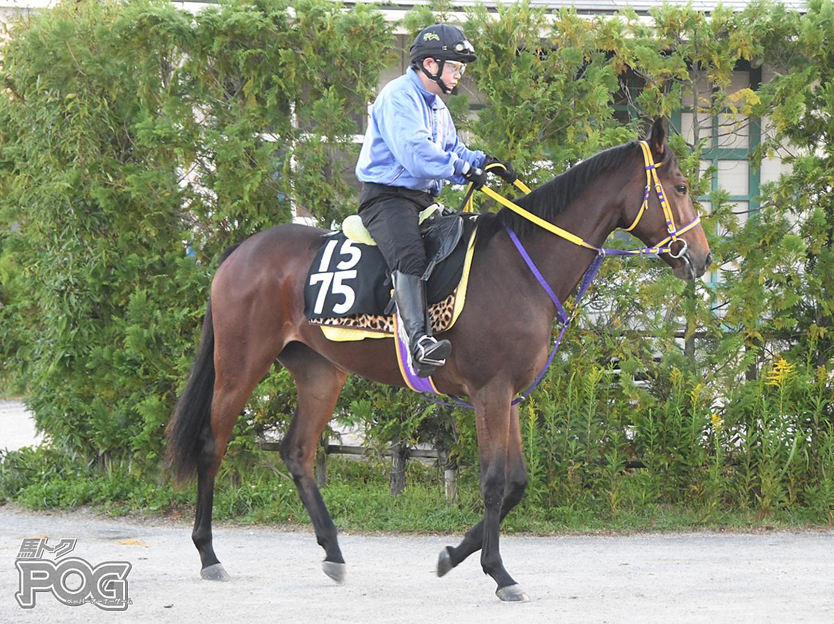 ウィッシュリストの馬体写真