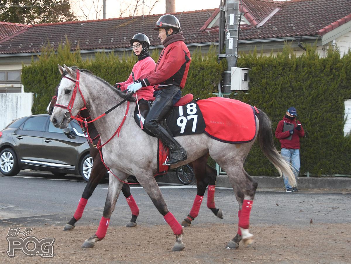 サンライズアミーゴの馬体写真