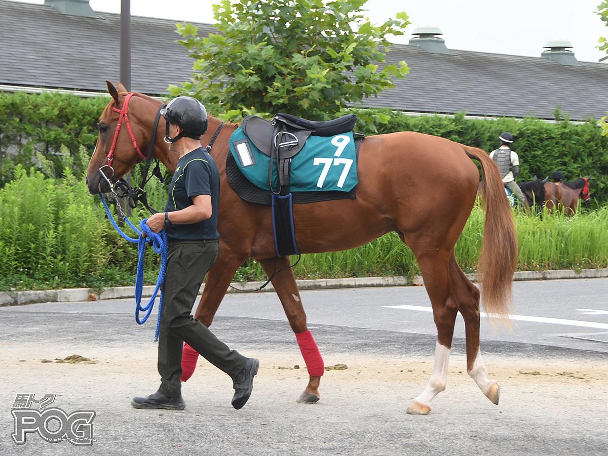 クリノユメジの馬体写真