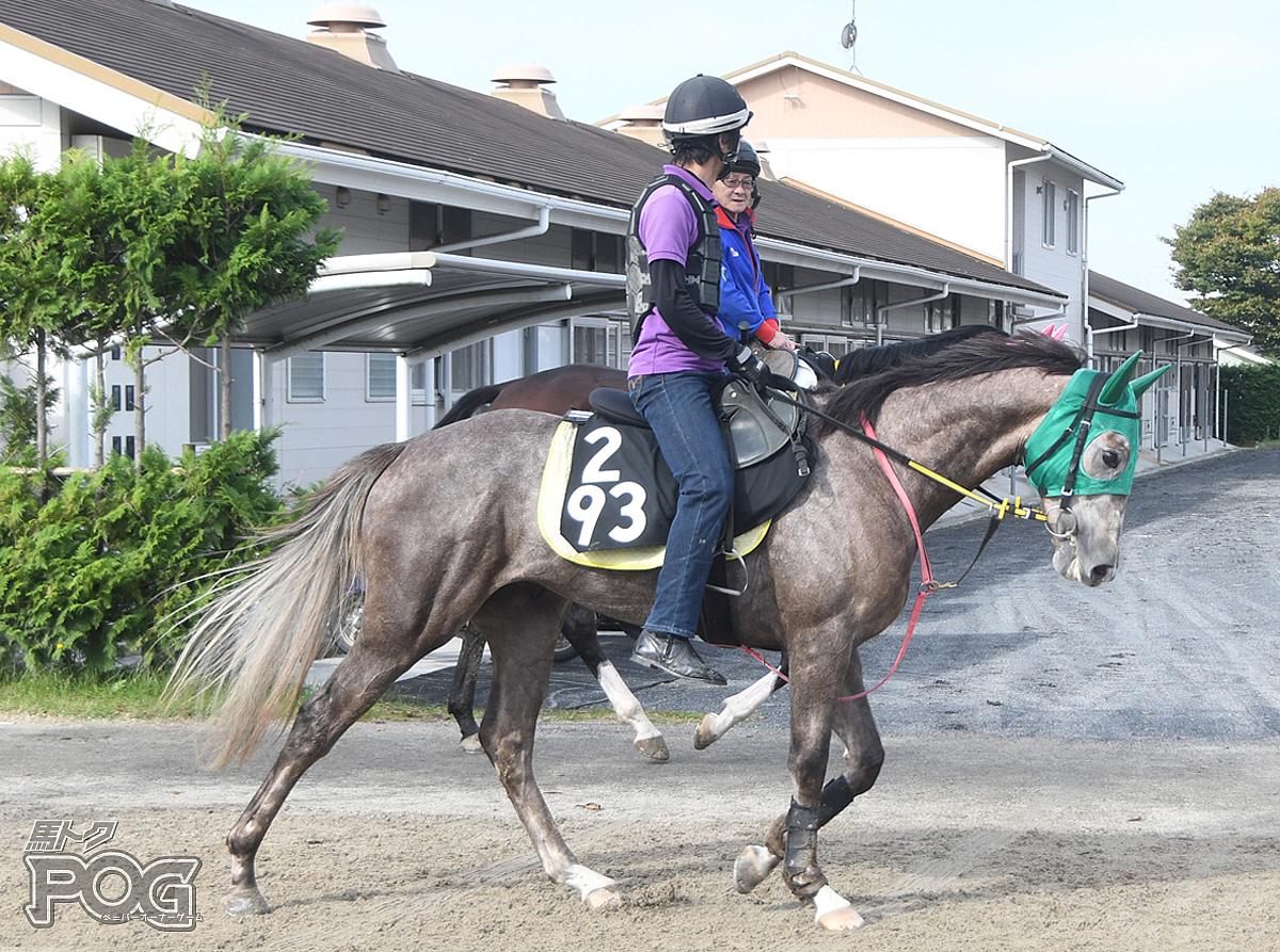 クリノタモンテンの馬体写真