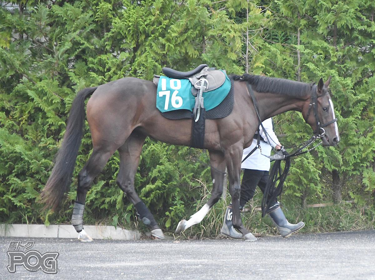 ダイメイスズの馬体写真