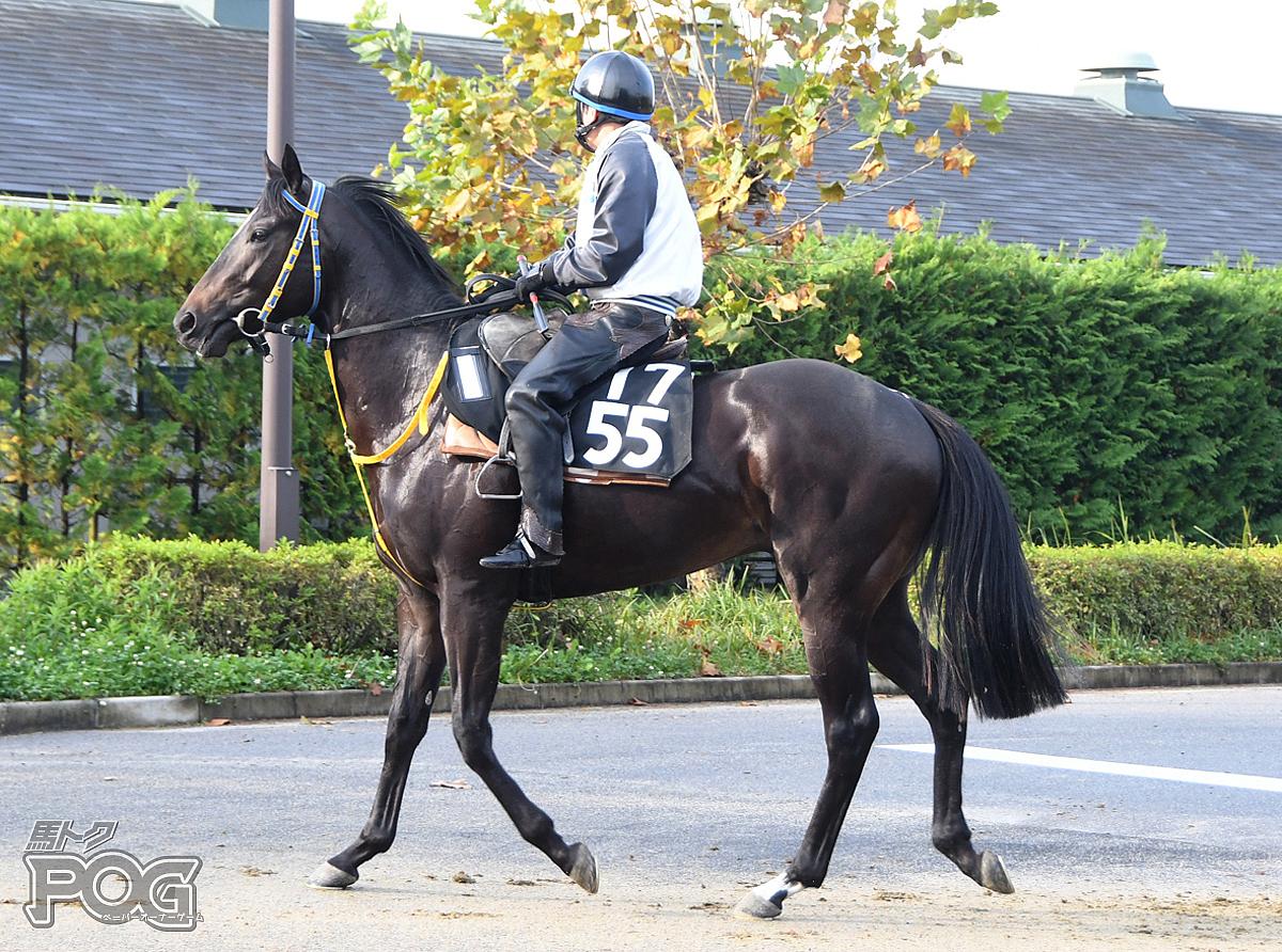 クリノイダテンの馬体写真
