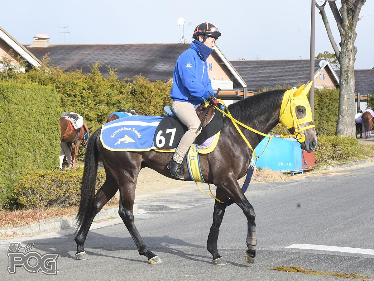 アリュールベルンの馬体写真