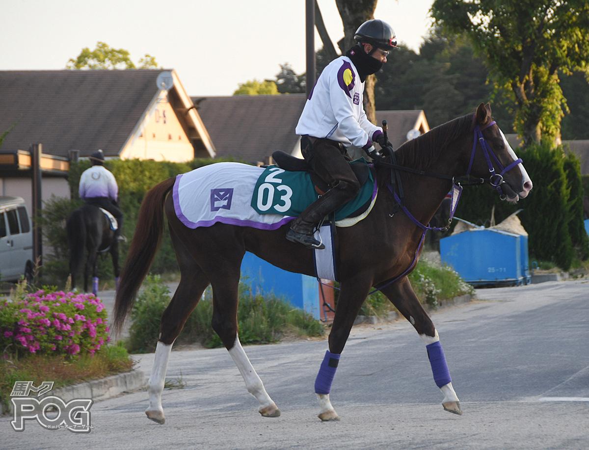 トウカイシーカーの馬体写真