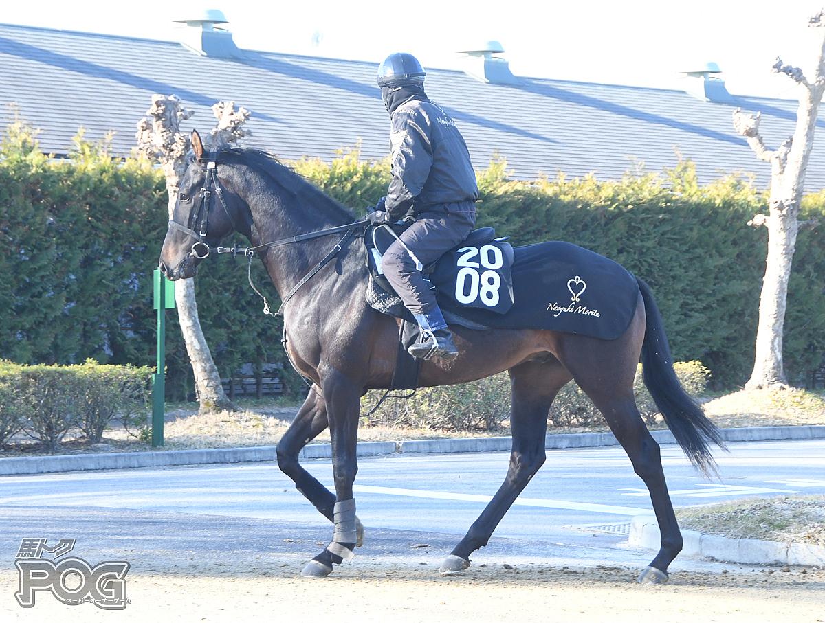 ヒミノゴールドの馬体写真
