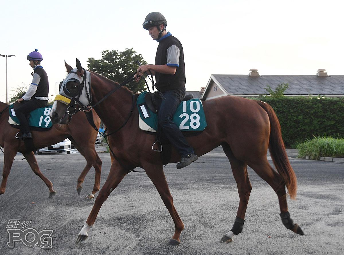 ビップデヴィットの馬体写真
