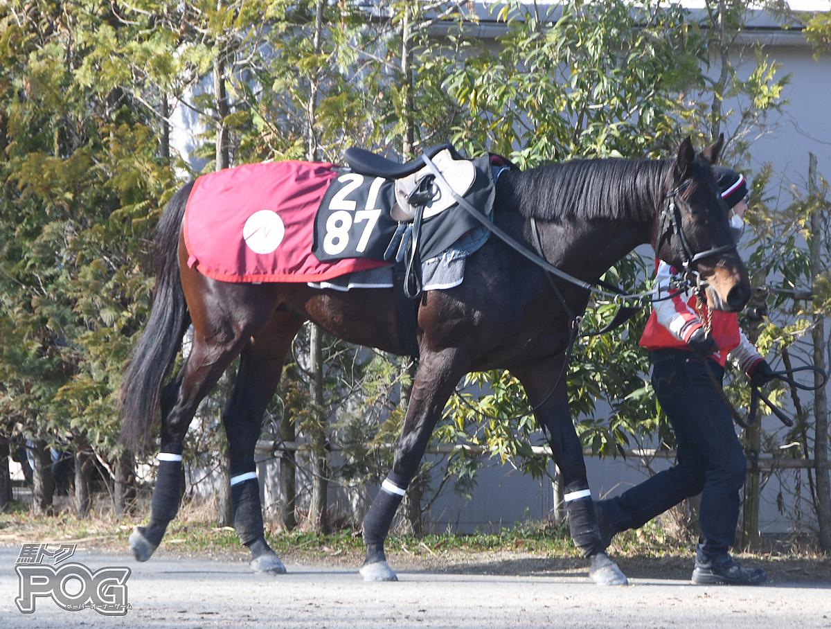 レッドランサーの馬体写真