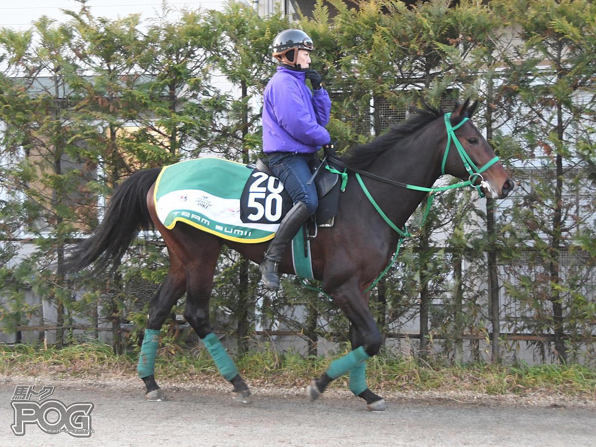 ビービーデフィの馬体写真