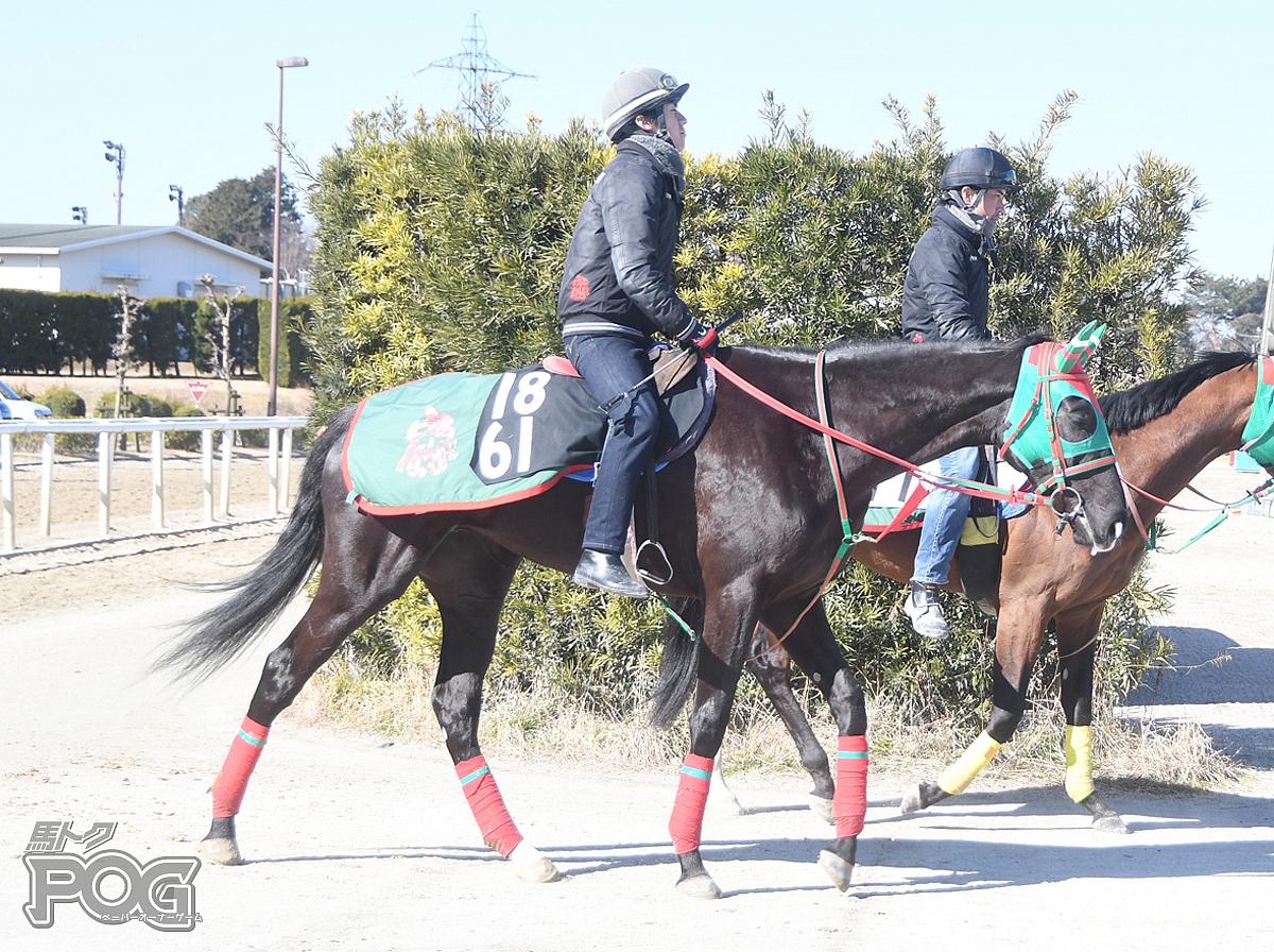 ブライティアサンバの馬体写真