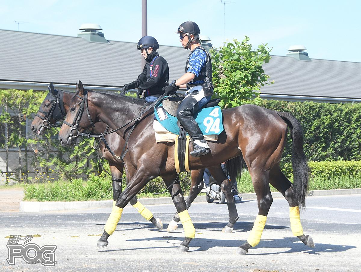 サンライズナイトの馬体写真